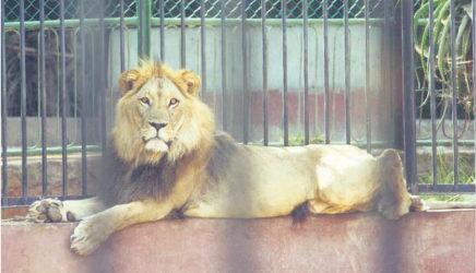 ترفيه: افتتاح حديقة الحيوانات عين السبع… العام المقبل!