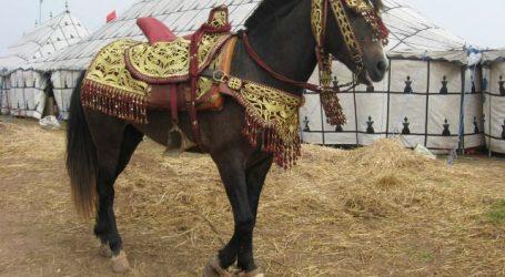 الشركة الملكية لتشجيع الفرس تطلق الدورة الأولى للملتقى الوطني للخيول البربرية والعربية البربرية