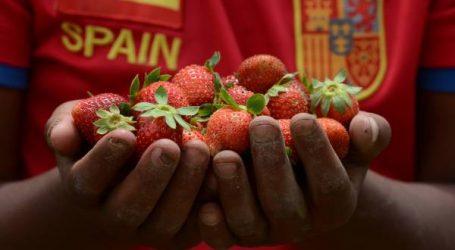 الفراولة الإسبانية خطرة على الصحة