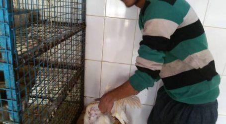 """استهلاك لحوم الدجاج بالمغرب: """"الرياشة"""" في قفص الاتهام"""