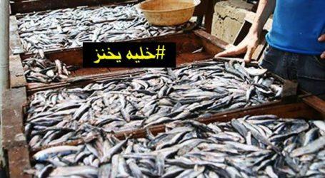#خليه يخنز: حملة مقاطعة الأسماك بدأت بالأسواق الأسبوعية الشعبية وانتشرت في المدن