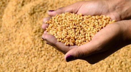 الحكومة: المحصول الفلاحي من الحبوب هذه السنة سيكون استثنائيا وقدره 98 مليون قنطار
