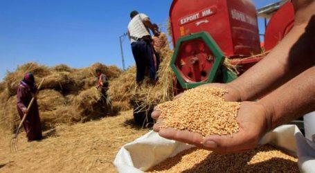 الحكومة ترفع السعر المرجعي للقمح اللين إلى 360 درهم للقنطار