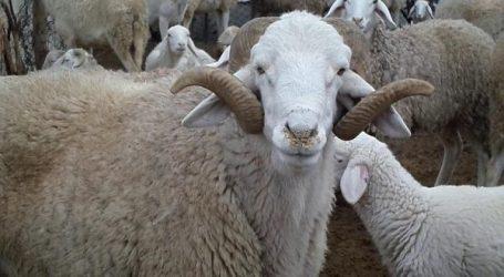 أونسا يعزز برنامجه الوقائي ضد أهم الأمراض الحيوانية المعدية