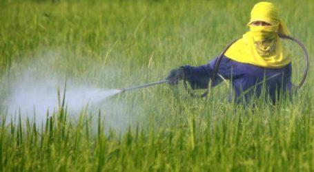 الجمارك تشن حربا على مبيدات فلاحية تتسبب في أمراض خطيرة